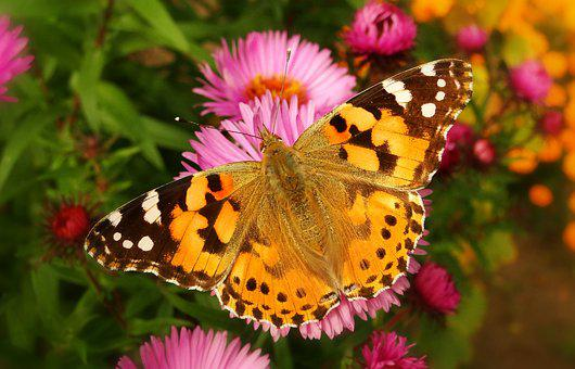 Butterfly Day, Nature, Insect, Flower, Garden
