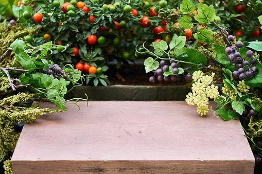 Plant, Garden, Spring, Flower, Nature, Green, Macro