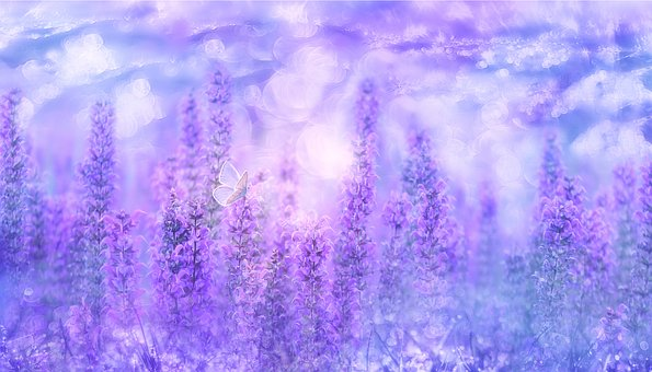 Violet, Sage, Plant, Nature, Medicinal Plant, Garden