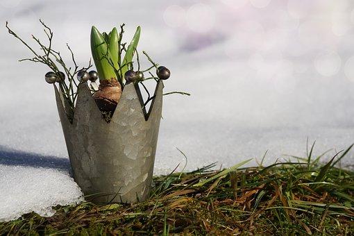 Nature, Grass, Growth, Plant, Winter, Snow, Awakening
