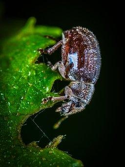 Bespozvonochnoe, Insect, Nature, Living Nature, No One