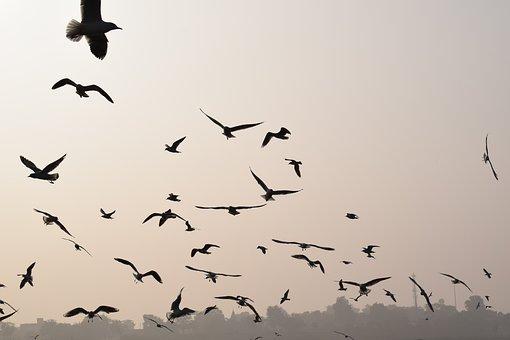 Bird, Wildlife, Flight, Nature, Goose, Migratory