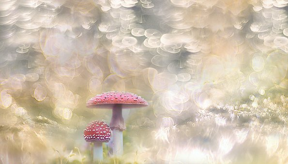 Mushroom, Mushrooms, Autumn, Forest, Close