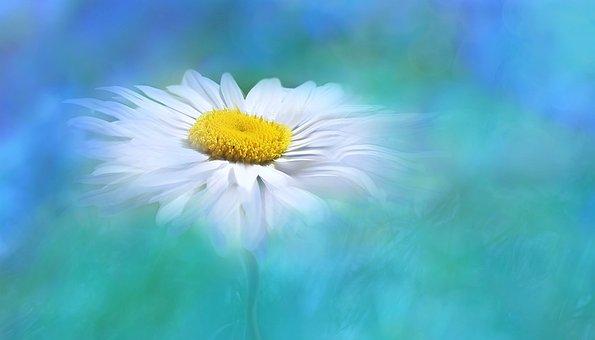 Nature, Summer, Bright, Flower, Plant, Digital Art