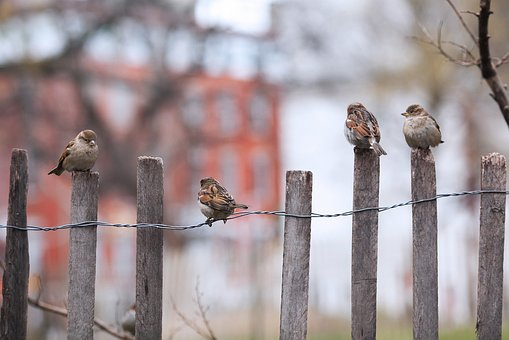 Bird, Fence, Outdoors, Nature, Winter, Wildlife, Wood