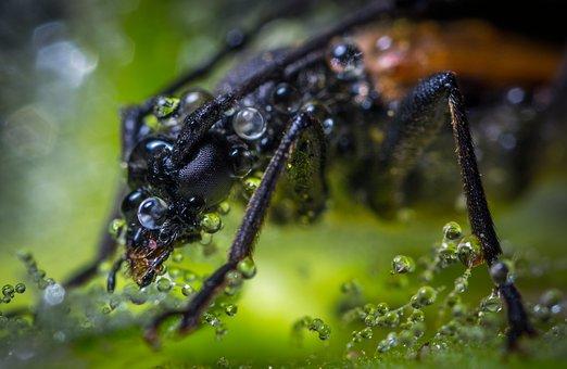 Insect, Bespozvonochnoe, Nature, Outdoors, Beetle, Rosa