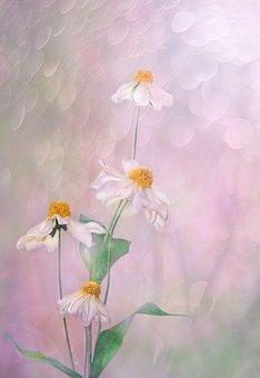 Flower, Plant, Nature, Leaf, Floral, Summer, Petal