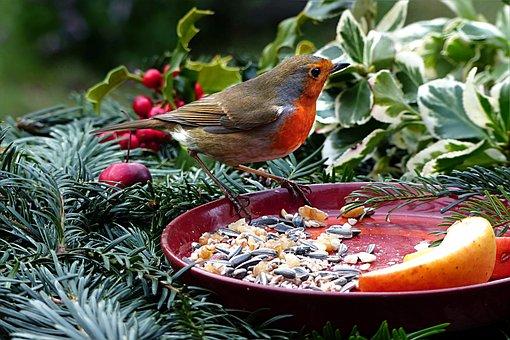 Animal, Bird, Robin, Erithacus Rubecula, Meal, Plate