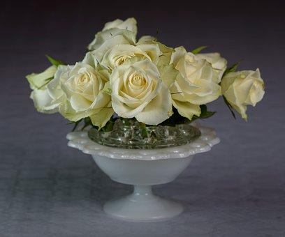 Flower, Roseslekta, Petals, Floral, Romantic, Rose