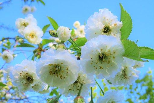 Flower, Nature, Plant, Tree, Thriving, Petal, Close-up