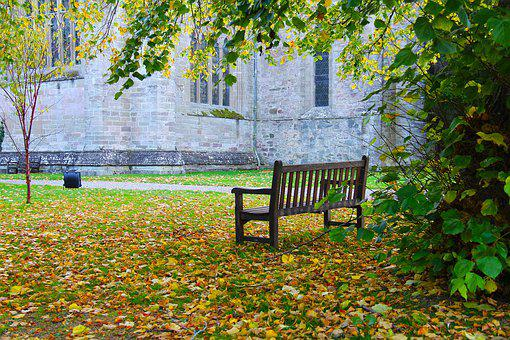 Leaf, Bench, Tree, Nature, Wood, Beautiful, Tranquil