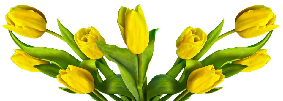 Tulip, Easter, Nature, Flower, Plant