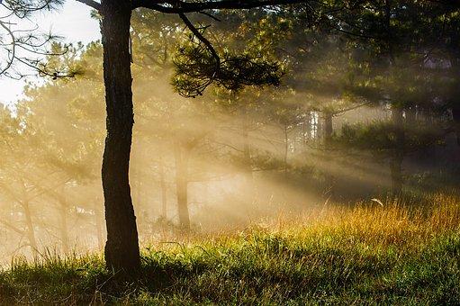 Forest, Scenery, Mist, Dawn, Sunshine
