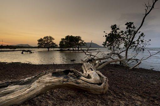 See, Scene, Reflect, Season, Forest, The Beach, Tree