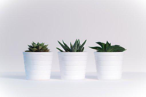 Plants, Sheet, White Background, Nature, Green, Plant