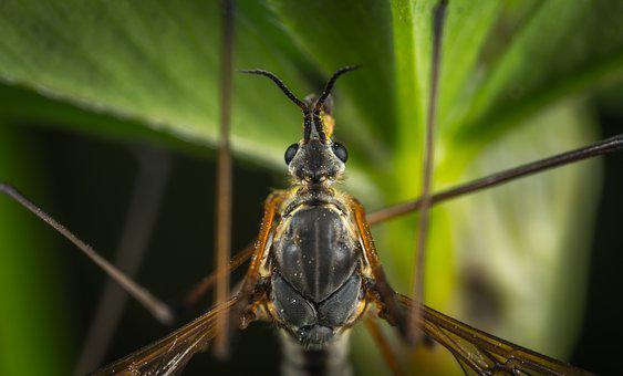 Insect, Nature, Living Nature, Animals, Wing