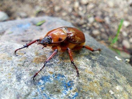 Nature, Wild Life, Insect, Animalia, Invertebrate