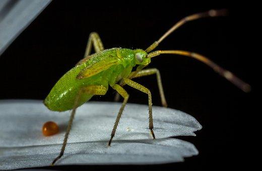 Insect, Bespozvonochnoe, Nature, Living Nature, Animals