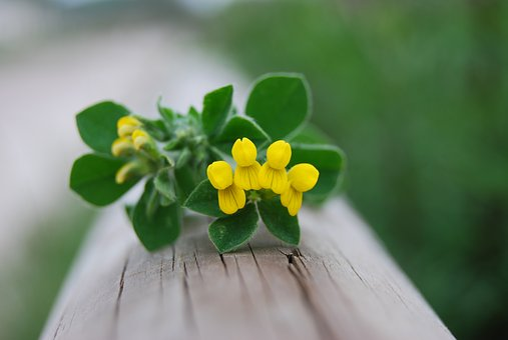 Flower, Yellow, Nature, Yellow Flowers, Macro, Small