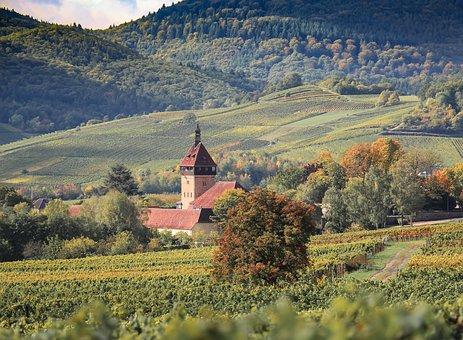 Agriculture, Landscape, Nature, Vineyard, Hill, Autumn