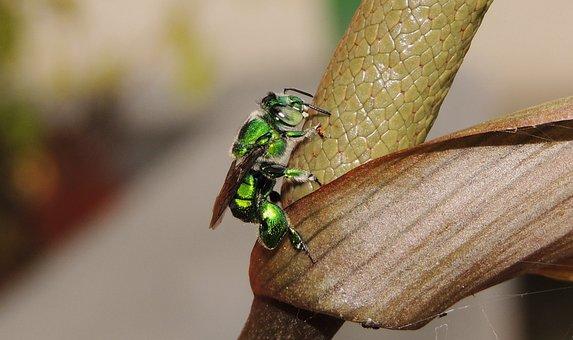 Nature, Insect, Animalia, Wild Life, Approach, Armenia