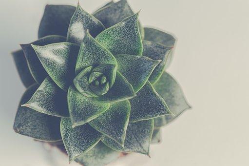 Desktop Background, Color, Plant, Isolated, Decoration