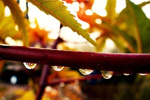 Drop, Water Droplet, Rain Drop, Stem, Foliage