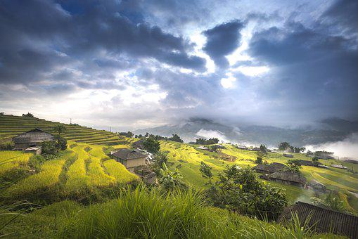 Vietnam, Rice, Rice Field, Ha Giang, Terraces