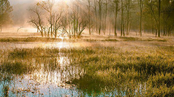Swamps, Scenery, Tree, Lighting, Beauty