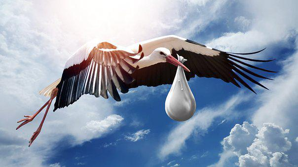 Bird, Nature, Wing, Sky, Flight, Stork, Fly, Elegant