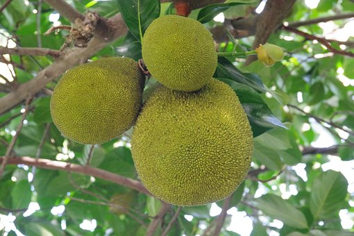 Tree, Fruit, Food, Branch, Nature, Hanging, Tropical