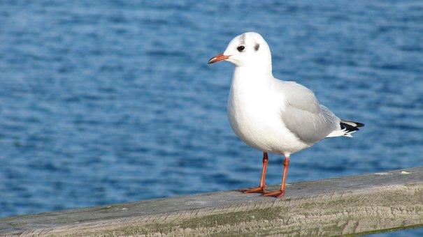 Bird, Waters, Nature, Sea, Seagull