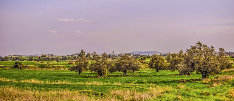 Nature, Grass, Agriculture, Rural, Panoramic, Landscape