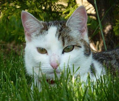 Cat, Portrait Head Of A Cat, Eye Of Cat, Animal, Cute