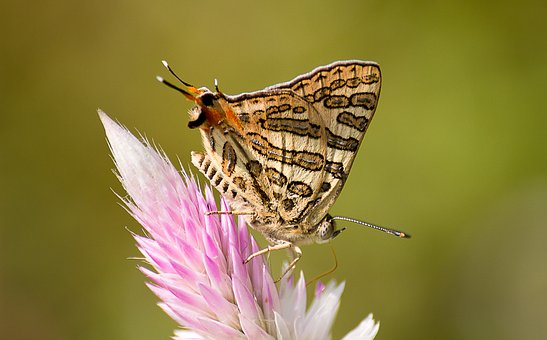 Nature, Insect, Butterfly, Animal, Wing, Outdoors