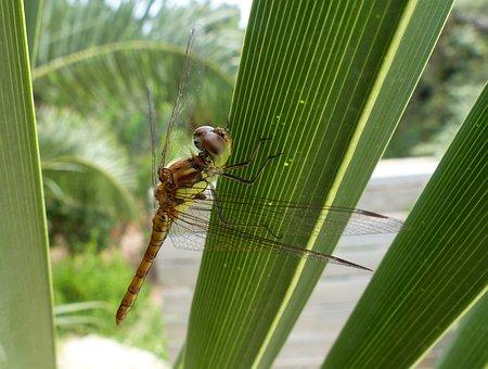 Dragonfly, Leaf, Green, Animal, Nature, Plant, Summer