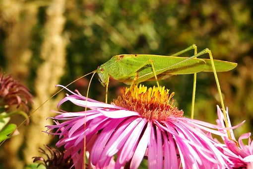 Nature, Insect, Flower, Plant, Garden, Animals