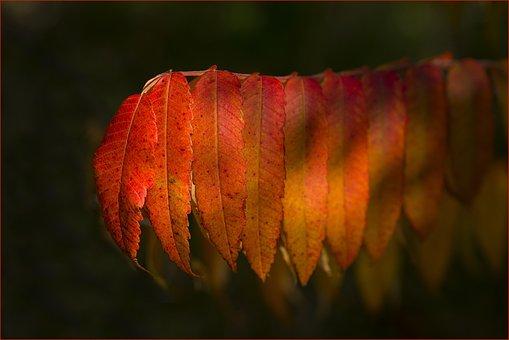 No Person, Desktop Background, Color, Autumn, Nature