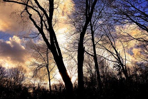 Tree, Bare Tree, Branch, Leafless, Winter Tree