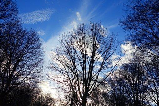 Tree, Bare Tree, Tree Top, Branch, Bare Branch