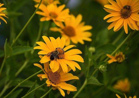 Flower, Nature, Flora, Summer, Field, Bee, Blossom