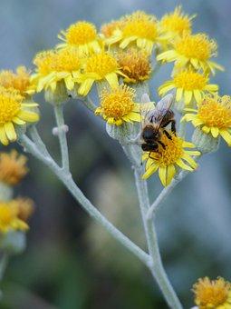 Nature, Flower, Plant, Summer, Hayfield, Field
