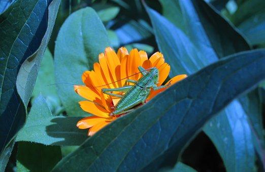 Nature, Leaf, Flower, Plant, Garden