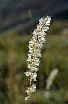 Nature, Outdoor, Plant, Flower, Current Season, Grass