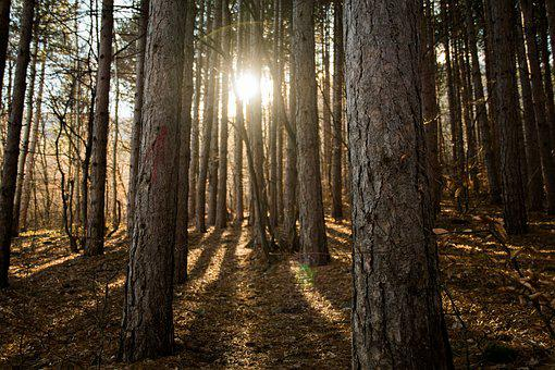 Wood, Tree, Nature, Light, Leaf, Landscape, Sun