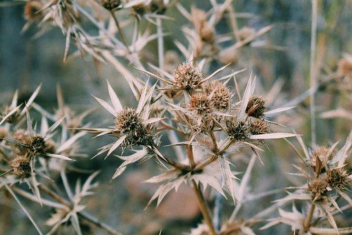 Nature, Plant, Scratchy, Green, Greens, Closeup