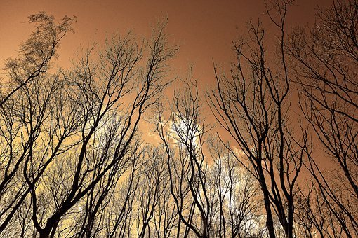 Tree, Tree Top, Branch, Bare Trees, Rising Up