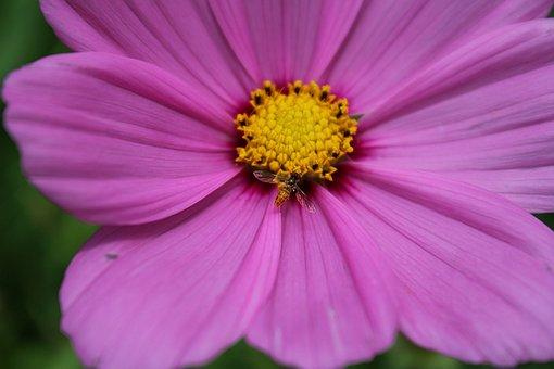 Nature, Flower, Flora, Summer, Petal
