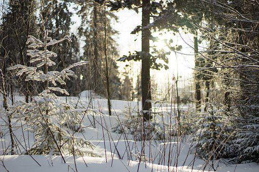 Forest, Nature, Trees, Winter, Snow, Icing, Sun