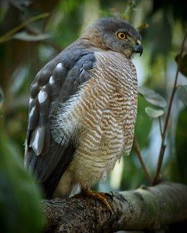 Bird, Wildlife, Feather, Nature, Raptor
